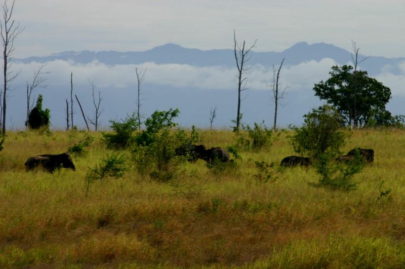 UW elephants 2004 PF