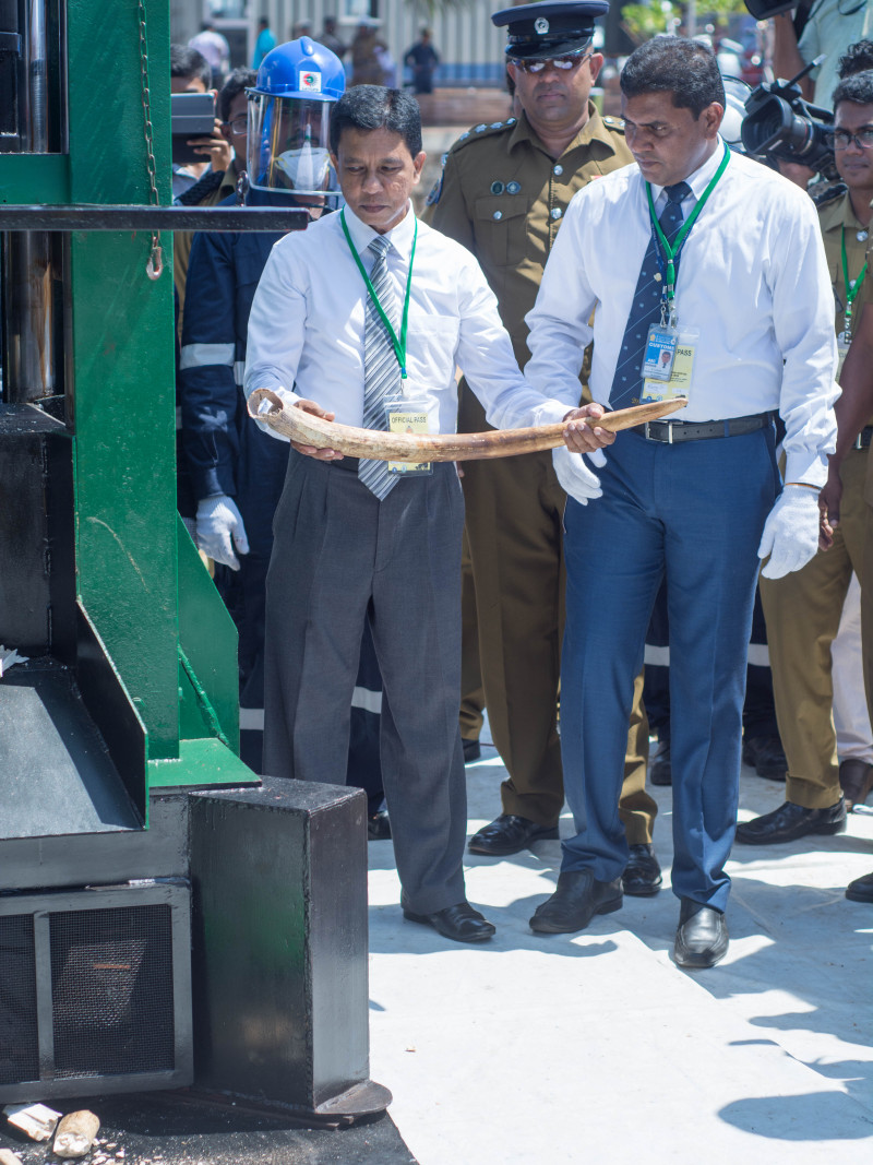 The first tusk to be crushed was actually poached in Sri lanka, and had been confiscated from poachers by the Department of Wildlife Conservation.