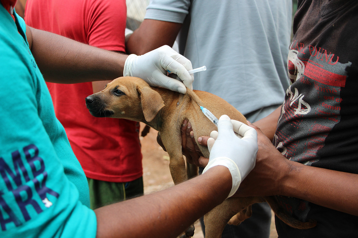 Everything You Need To Know About Sri Lanka's Stray Dog