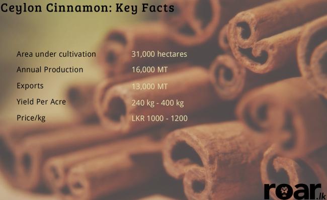 Cinnamon. Image credit: Adam Wita/DeviantArt