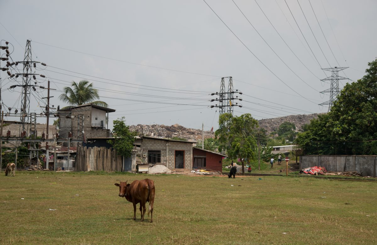 Cows graze on grounds close to the landfill. The garbage mountain makes up the backdrop, and electricity lines span high over the area.